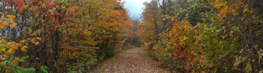 Fall trail run