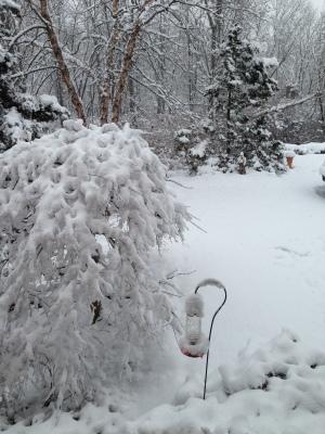 Yay! Fluffy, white snow.